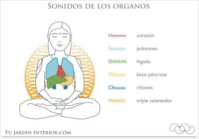 Sonido organos
